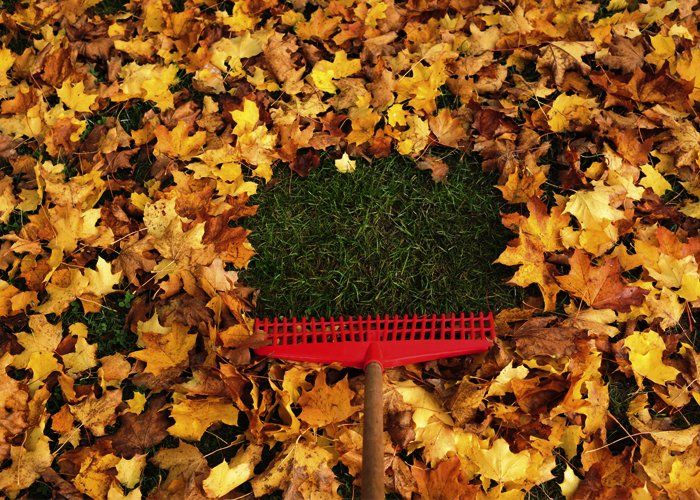 ranker lawn care spring cleanup fall cleanup leaf removal service